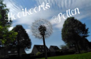 hooikoorts-pollen