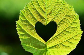 leaf-2447433__340